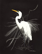 March Drawings Prints - Egret Print by Paul Shafranski