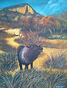 Yvonne Cacy - Elk In V-Rock Path