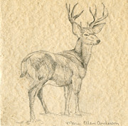 Mary Ellen Anderson Framed Prints - Elk Framed Print by Mary Ellen Anderson