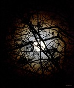 Entangled Posters - Entangled in Moonlight Poster by Maria Urso