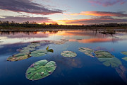 Swamps Prints - Everglades at Sunset Print by Debra and Dave Vanderlaan