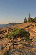 Acadia National Park - Evergreen by Juergen Roth