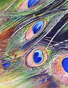Original Watercolor Paintings - Eyes Of The Stars by Robert Hooper