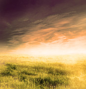Agriculture Art - Fairy magical landscape with sunrise fog by Photocreo Michal Bednarek