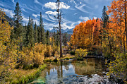 Landscape. Scenic Framed Prints - Fall at Bishop Creek Framed Print by Cat Connor