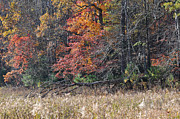 Fall Leaves Photo Originals - Fall Field by Todd Hostetter