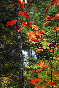 Autumn Metal Prints - Fall forest and river Metal Print by Elena Elisseeva