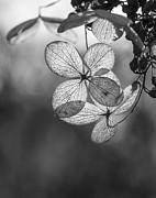 Steven Ralser - Fall Leaves