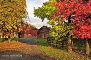 Fall Photos Prints - Fall on a Farm in Oregon Print by Tonia Noelle