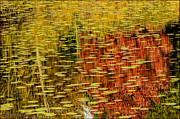 LeeAnn McLaneGoetz McLaneGoetzStudioLLCcom - Fall Reflections