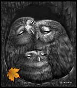Owls Drawings - Familia by Miki Krenelka