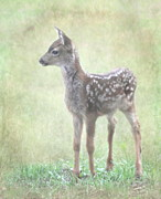 Fawn Photos - Fawn by Angie Vogel