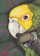 Amazon Parrot Paintings - Feathered Curiosity by Candace OBrien