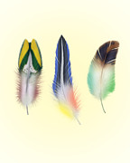 Whimsical Illustration Posters - Feathers Poster by Mark Ashkenazi