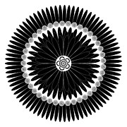 Black And White Drawings Drawings - Floral Ornament by Frank Tschakert