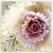 Flower Photo Prints - Flower Print by Les Cunliffe
