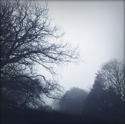 Oak Photos - Foggy morning by Les Cunliffe