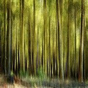 Trees Abstract Tree Lines Forest Wood Prints - Forest Print by Bernard Jaubert