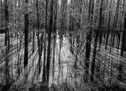 Flooding Photos - Forest Reflections by Mountain Dreams