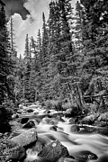 James BO  Insogna - Forest Stream in Black and White