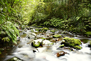 Peaceful Scenery Posters - Forest stream Poster by Les Cunliffe