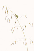 Elizabeth Romanini Metal Prints - Fork-Tailed Bush Katydid Metal Print by Elizabeth Romanini