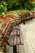 Wood Bench Posters - Formal garden Poster by Elena Elisseeva