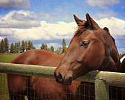 Quarter Horse Framed Prints - Forrest Framed Print by Susie Fisher
