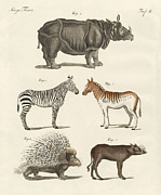 Rhinoceros Unicornis Framed Prints - Four-footed animals Framed Print by Friedrich Justin Bertuch