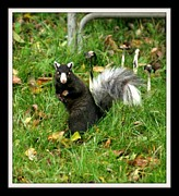 Gail Matthews - Fox Squirrel