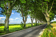 Asphalt Photo Framed Prints - French country road Framed Print by Elena Elisseeva