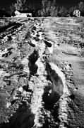 Sask Prints - fresh footprints crossing deep snow in field towards small rural village of Forget Saskatchewan Cana Print by Joe Fox
