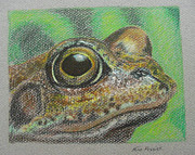 Color Pencil Drawings - Froggy by Nina Fosdick
