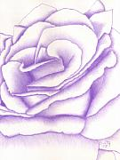 Lavender Drawings - Frosted Lavender Rose by Dusty Reed