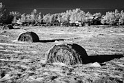 Feeds Photo Prints - frozen snow covered hay bales in a field Forget Saskatchewan Canada Print by Joe Fox