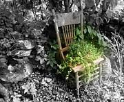 Lois Lepisto - Garden Chair