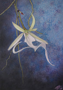 Ghost Pastels Framed Prints - Ghost Orchid II Framed Print by Robin Street-Morris