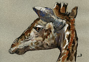 Nature Study Painting Posters - Giraffe head study Poster by Juan  Bosco