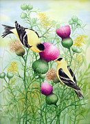 Fauna Painting Metal Prints - Gold Finches on Thistles Metal Print by Johanna Axelrod