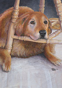 Terry Albert - Golden Retriever