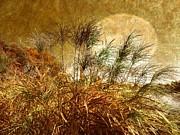 Judy Palkimas - Golden Sunset
