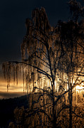 Winter Night Art - Golden Tree by Erik Brede