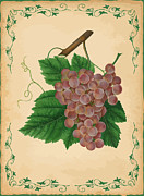 Grape Leaf Digital Art Prints - Grapes Illustration Print by Indian Summer