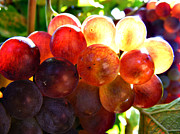 Grape Leaf Originals - Grapes In Sunlight by Laszlo Slezak