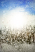 Backgrounds Metal Prints - Grass and sky  Metal Print by Les Cunliffe