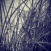 Vintage Photography Prints - Grass Print by Kristin Kreet