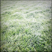 Dew Prints - Grass Print by Les Cunliffe