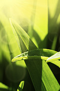 Mythja Posters - Grass macro Poster by Mythja  Photography