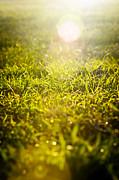 Tim Hester - Grass Sunrise