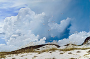 Beach Bird Paintings - Grayton Beach by Rick McKinney